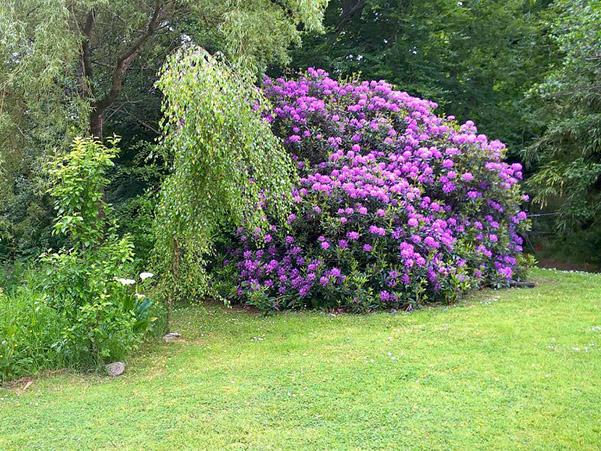 Dyffryn Moor Garden 3