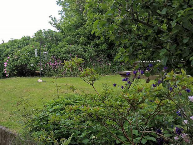 Dyffryn Moor Garden